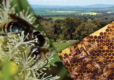 Wheen Bee Powerful Pollinators Guides